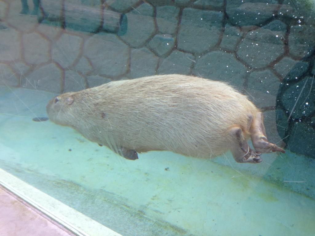 ※泳いでます