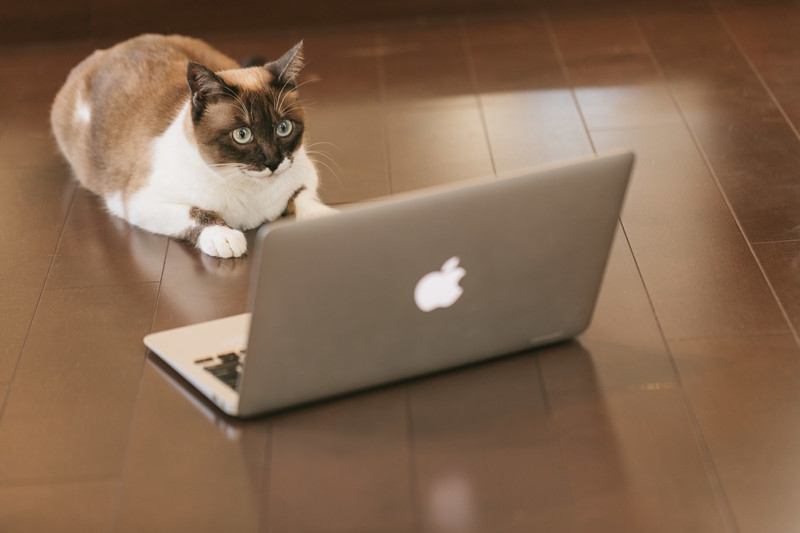 【WEBマーケティング】オンラインで集客するための基本
