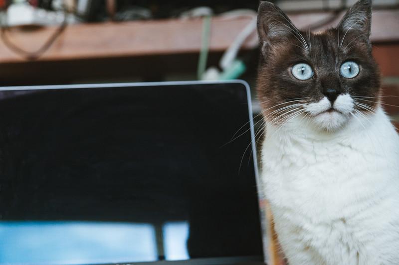 【ブログ】初心者向けに記事を書く時に陥る罠