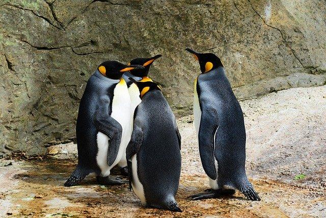 ファーストペンギン対ラストペンギンという意味不明な対立